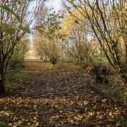The Lovell Quinta Arboretum, Swettenham, CW12 2LF